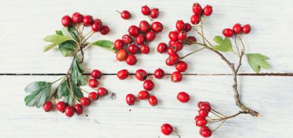 3 Reasons To Add Rosehip Oil To Your Skin Care Routine Rosehip Oil Floral Oil Skin Care