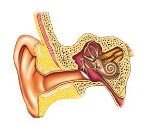 Inner Ear Infection Symptoms Infeccao Na Orelha Doenca Zumbido No Ouvido