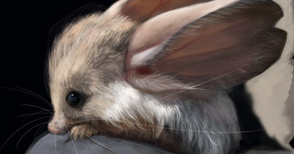 A Long-eared Jerboa is a hopping desert rodent. REAL LIFE JACKALOPE