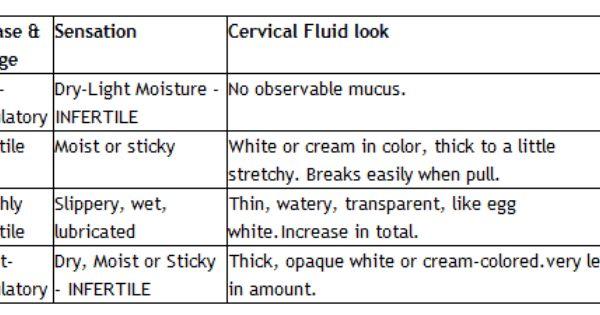 Cm Info Cervical Mucus Chart Cervical Mucus Fertility Awareness