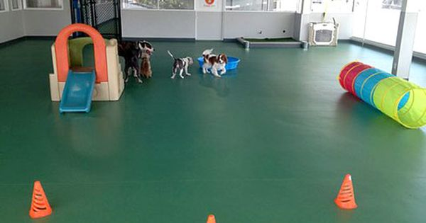 Natural Light Strip Mall Dog Daycare Luxury Dog Kennels Dog Playground