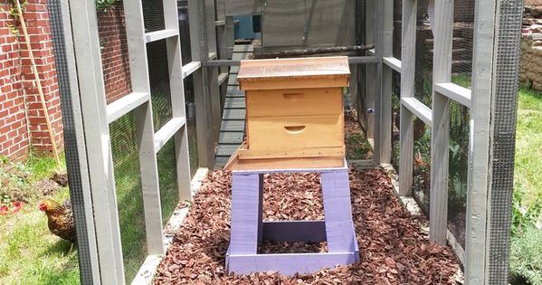 Bee hive in an enclosed chicken coop run homesteading for Enclosed chicken run plans