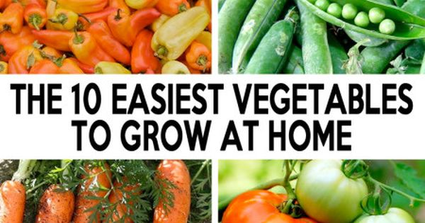 The 10 easiest vegetables to grow at home here are some for Easiest vegetables to grow