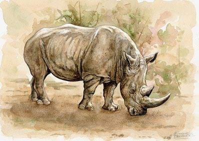 Big Five Watercolor Gallery Animal Paintings Animal Art