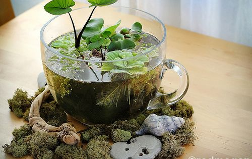 A crafty response to a hibernating outdoor garden is an indoor tabletop