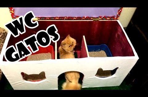 Banheiro Para Gatos Youtube Banheiro Gato Caixa De Areia Gato