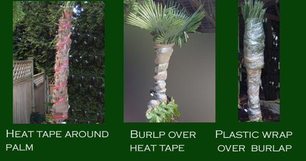 Garden Centre Surrey B C With Images Palm Plant Palm Trees Palm