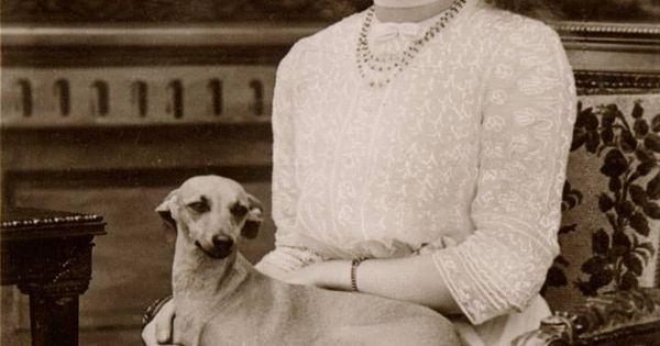 Italian Greyhound Queen Victoria HRH Princess Mary - gr...