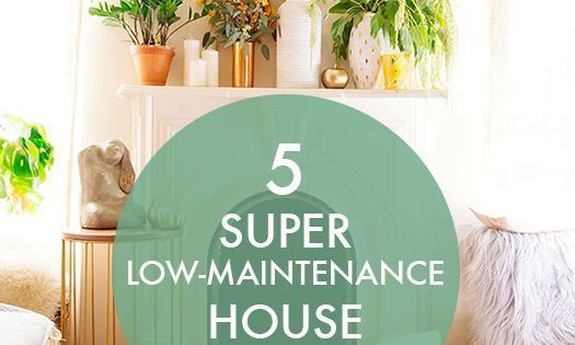 5 super low maintenance house plants easy house plants aloe and jade - House plants low maintenance ...