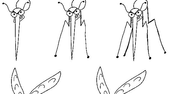 how to draw a mosquito