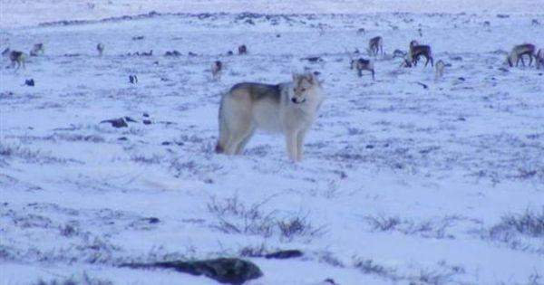 nunavut inuit owned lands