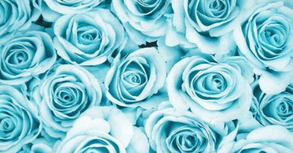 blue roses wallpaper background home screen studio