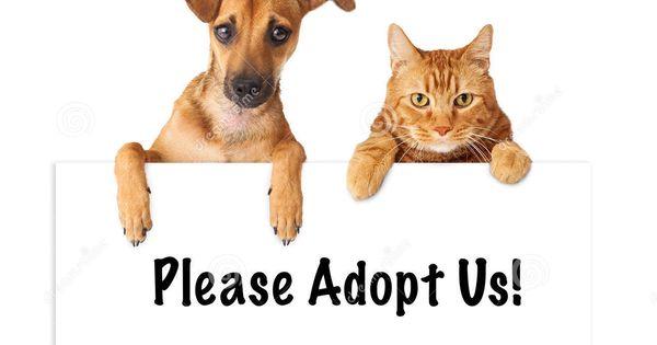 Dog And Cat Adopt Us Animals Pet Adoption Pets Cats