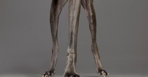 Beautiful With Only Three Legs 3 Legged Dog Dog Pictures