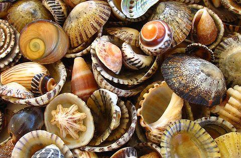 finding seashells on the beach