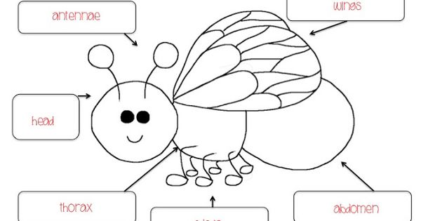 Insect Body Parts Worksheet Bing Images Butterflies