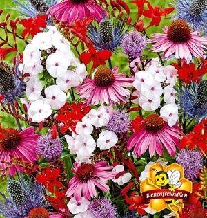Mein Schoner Garten Sommerliebe Stauden Kollektion 20 Pflanzen Gunstig Online Kaufen Mein Schoner Garten Shop Staudenbeet Winterharte Stauden Pflanzen