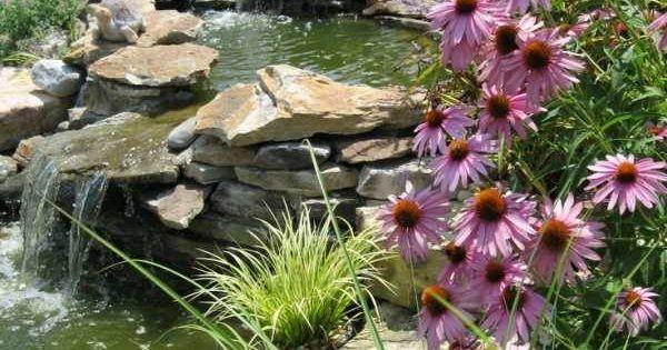 Naturstein brunnen gartenteich umrandung bl hende pflanzen for Gartenteich umrandung