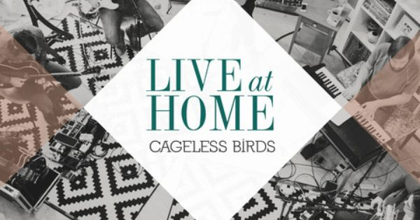 Cageless birds live at home cd dvd the morning home and bird cageless birds live at home cd dvd the morning home and bird store stopboris Choice Image
