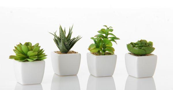 Conjunto de macetas y plantas decorativas en blanco for Plantas decorativas