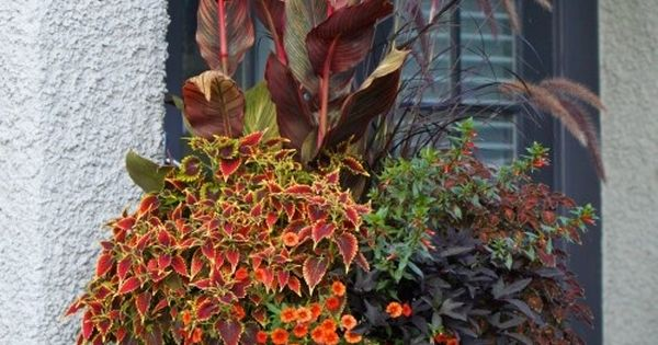 Beautiful fall planter: cannas, purple fountain grass, sweet potato vine, petunias, sage,