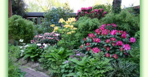 Rhododendron Funkien Vorgarten Garten Bilder