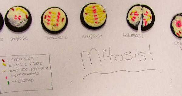 oreo mitosis