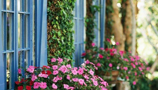 Hanging baskets jazz up this small side yard. And blue shutters. Find
