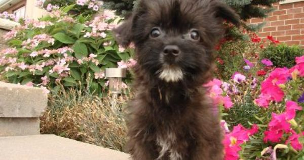 Tony S Happy Puppies For Sale In Hampshire Illinois Puppies For Sale Happy Puppy Puppies