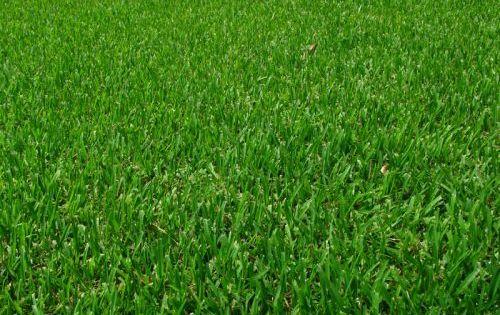 une belle pelouse pelouse r ussir et conseils. Black Bedroom Furniture Sets. Home Design Ideas
