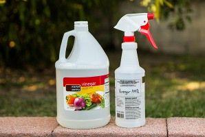Remove Mold White Vinegar Mold Remover Kill Black Mold Clean