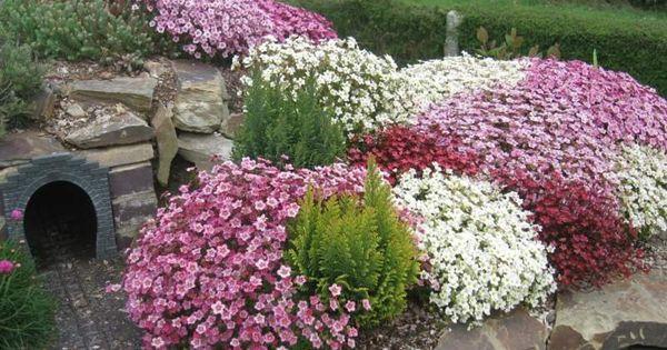 steingarten pflanzen in form von kleinen b schen garten pinterest steingarten pflanzen. Black Bedroom Furniture Sets. Home Design Ideas