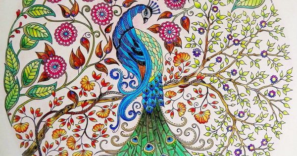 My garden colouring pages - Peacock Secret Garden Pav O Jardim Secreto Johanna