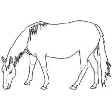 Animals Coloring Pages Horses Coloring Pages Animal Coloring