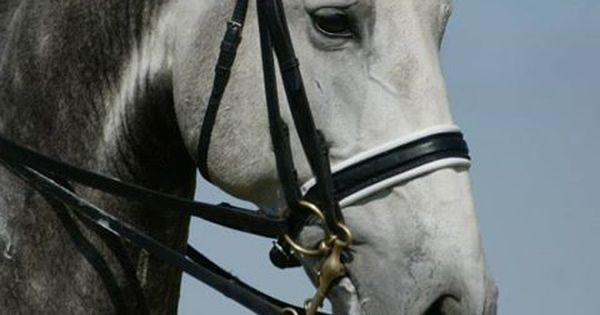 sa-equestrian: Helloooo gorgeous. From Tumblr