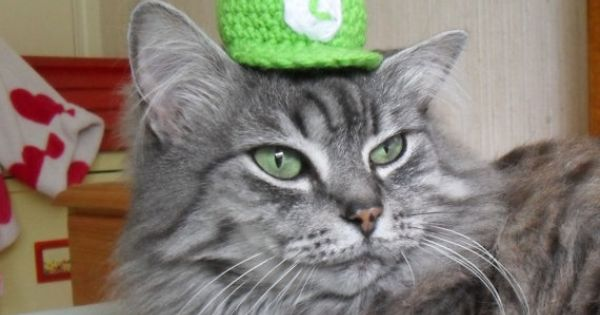 Cats Dressed Up Like Mario And Luigi