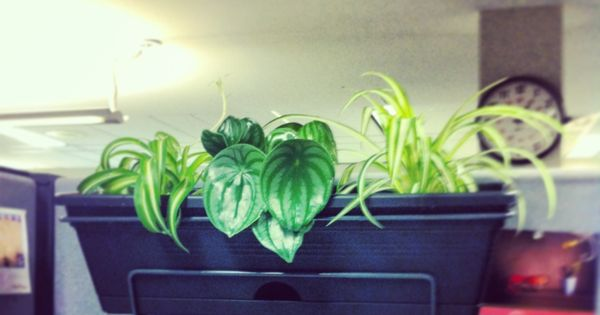 Balcony planters also work on cubicle walls grow pinterest balcony planters cubicle walls - Cubicle planters ...