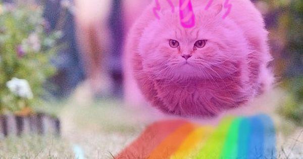 Wieeeeh On We Heart It ℬelieve In Pink Dancing Cat Unicorn Cat Rainbow Cat