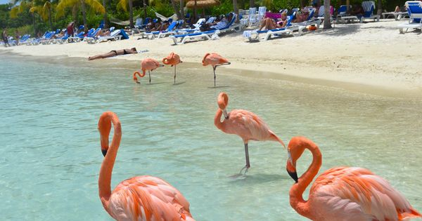 Flamingo Beach - Renaissance Island, Aruba-I got married here!!!!!!