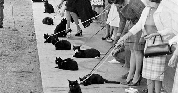 Black Cat Auditions in Hollywood (1961) life magazine. black and white photo.