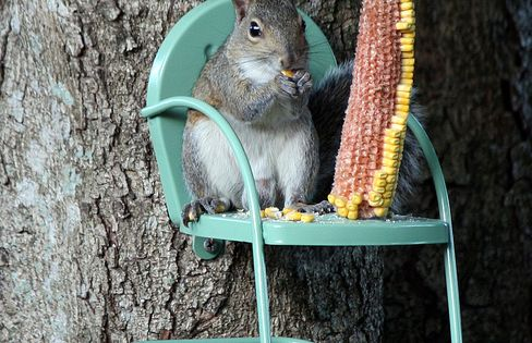 A Squirrel Chair- this is awesome. We have tons of squirrels in