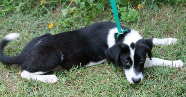 Orange White Beagle White Beagle Dog Communication
