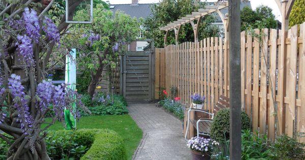 Blauwe regen in mei in de achtertuin prachtig en ruikt zo heerlijk garden pinterest - Wijnstokken pergola ...