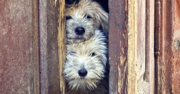 cute dogs @fitbark