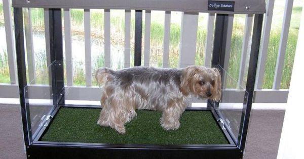 Indoor Dog Toilets Dog Toilet Dog Potty Area Dog Bathroom