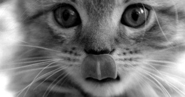 Résultat d'images pour Photo de chat en noir et blanc