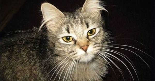 How To Make A Homemade Cat Wormer Cuteness Cat Worms Cat Dewormer Cat Remedies