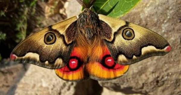 Mariposa Nocturna Chilena Colorful Moths Most Beautiful