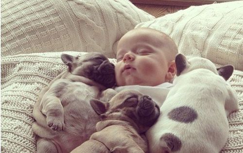 Sleeping baby and puppies kids animals