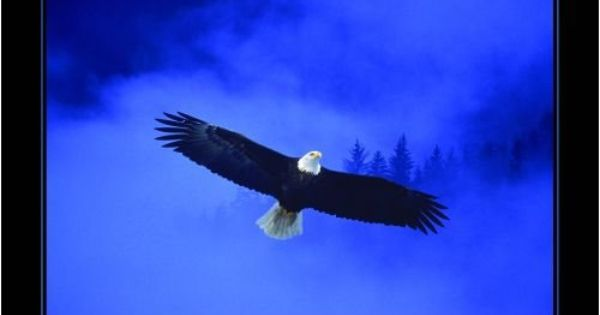 eagle christian posters - Bing Images | eagles rise up on ...